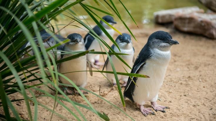Islands in Australia Phillip Island