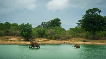Udawalawe National Park  is known for its safaris and tourism.