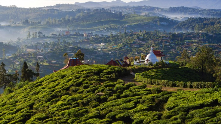 Nuwara Eliya is known for its tea plantation.