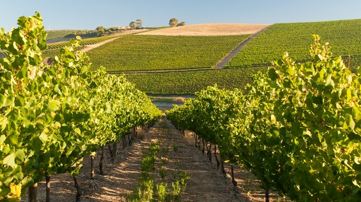 Jordan Vineyards in Stellenbosch