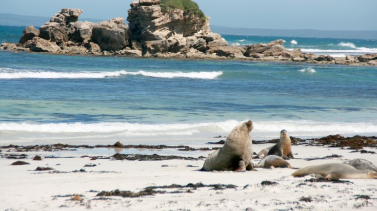 Kangaroo Island is one of the best destinations in South Australia.