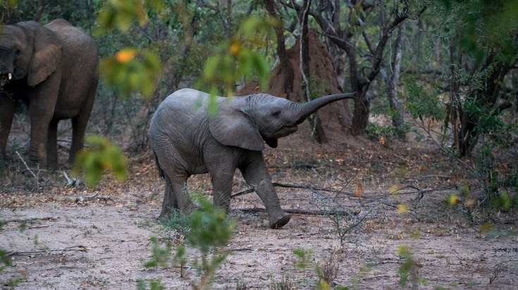 Kapama Game Reserve is a private game lodge in South Africa.