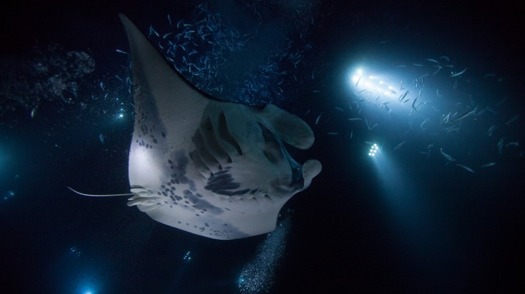 Kona Mantas have the best dive site for night dives