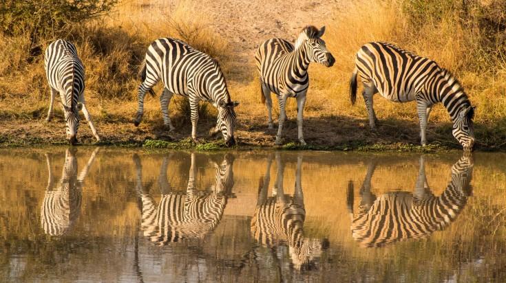 Kruger National Park in South Africa