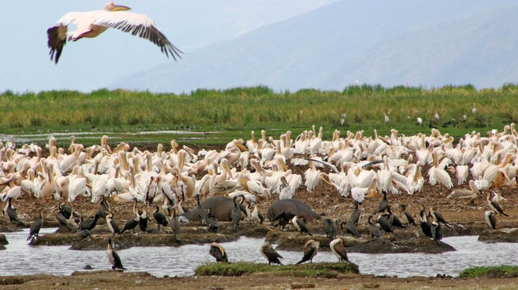 Birds at Lake Manyara National Park