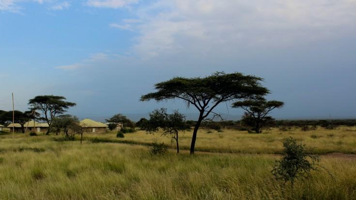 The indigenous  landscape of Ethiopia