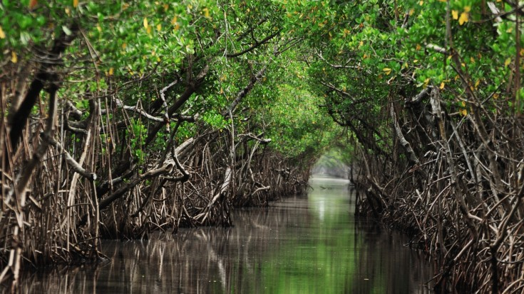 Lembongan Island has a mangrove forest that is a great place to take a boat