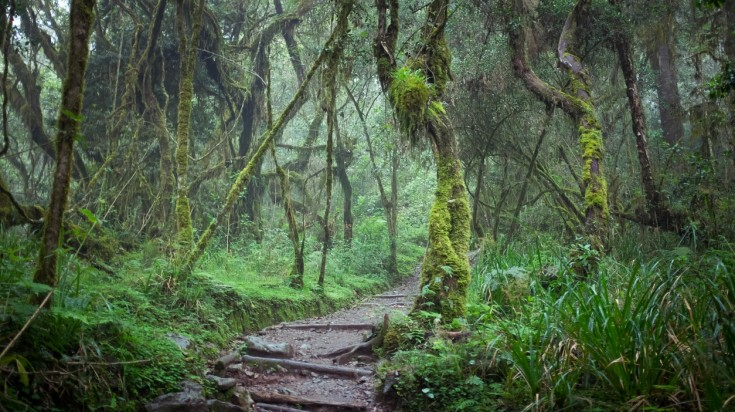 Rainforest in Kilimanjaro National Park