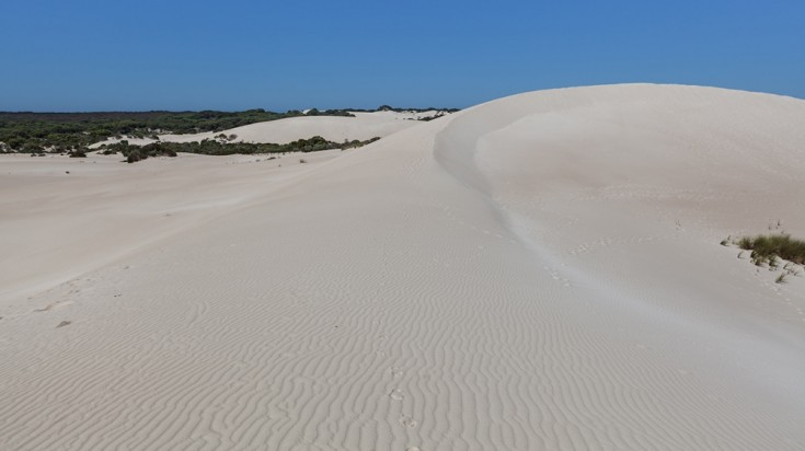 A must do activity in Kangaroo Island is sand boarding in Little Sahara