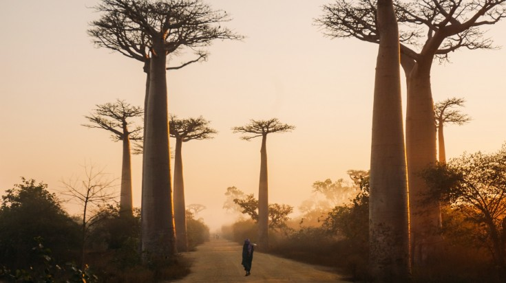 Madagascar is famous for its unique wildlife and its various landscapes