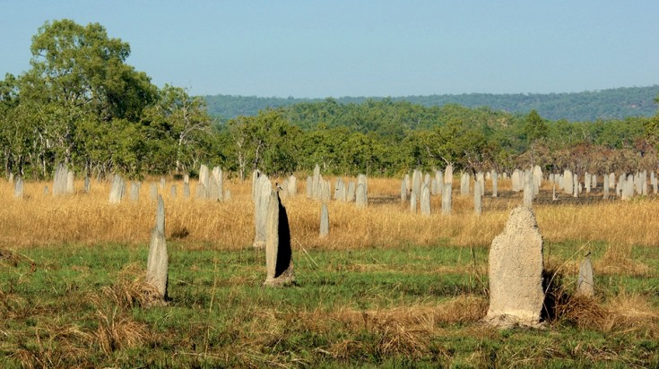 The termite mounds are a unique attraction in Darwin