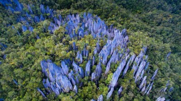 Pinnacles in Mulu National Park