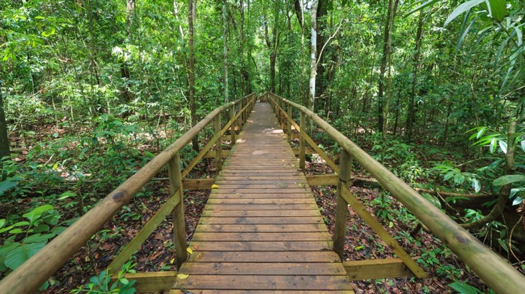 Manuel Antonio consists of several wooden trails
