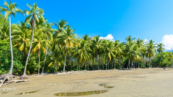 Marino Ballena National Park has perfect white sand.