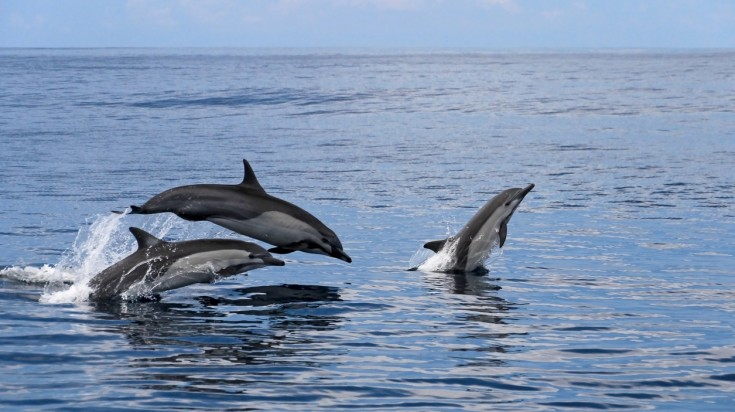 Marino ballena national park is a great place to spot dolphins