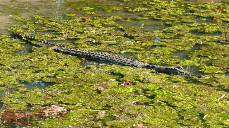 The Mary River Wetlands are a great place to spot crocs in Darwin