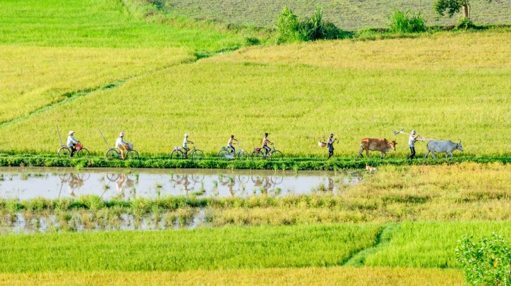 Mekong is a great place to go cycling in Vietnam