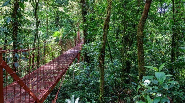 Monteverde Reserve is an ideal place to go on expeditions with the family