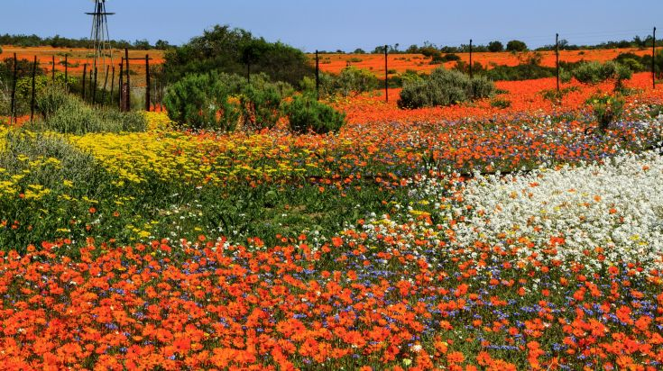 The Namaqualand flower route