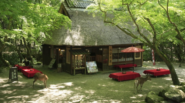 Nara park in Japan is home to 1000 freely roaming deer.