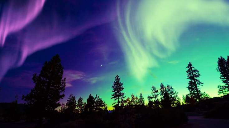Multicolored lights in the sky above a forest