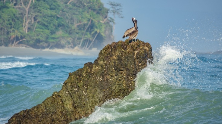 Water, birds and beaches of Corcovado National Park.