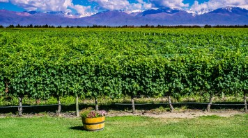 Mendoza in Argentina is a must visit place