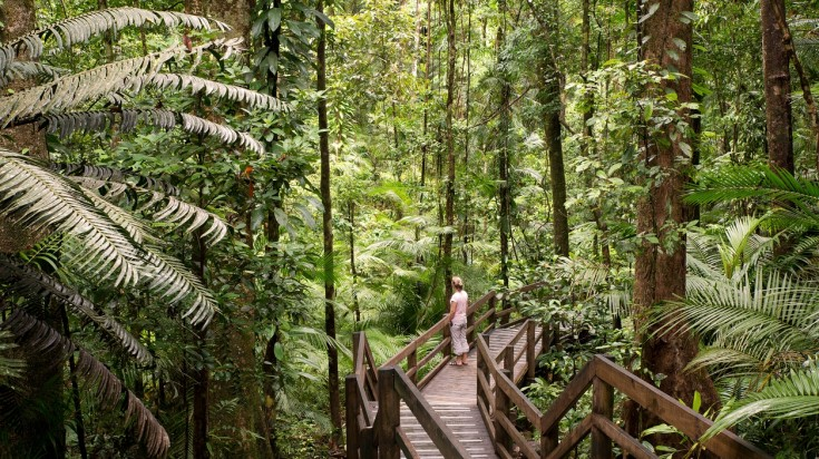 Places to visit in Australia, Daintree National Park
