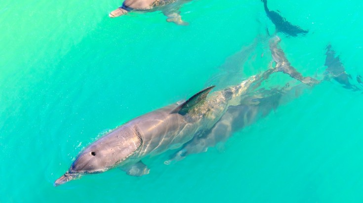 Dolphins in Monkey Mia, places to visit in Australia