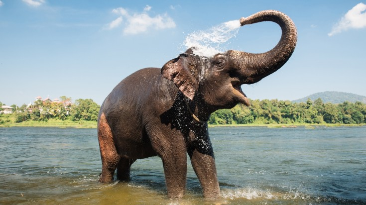 Periyar National Park in Kerala is a must-visit