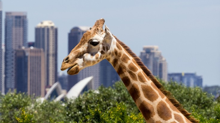 Places to visit in Sydney Taronga zoo