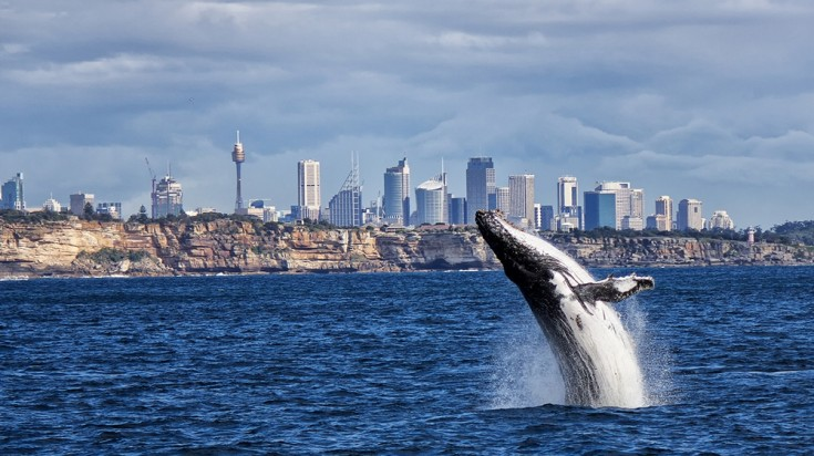 Places to visit in Sydney whale watching