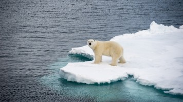 Polar bears can be sighted in Greenland.