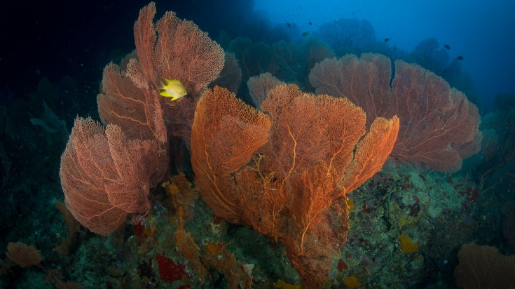 Pulau Ai is a spot for diving in indonesia to encounter diverse marine life
