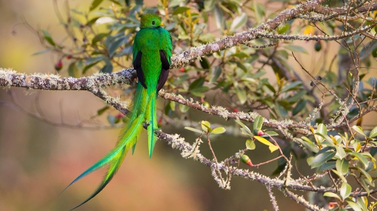 Monteverde Cloud Forest Reserve is where you will find the Quetzal.
