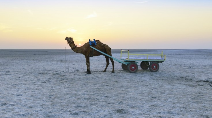 Rann of Kutch is one of the places to go in India