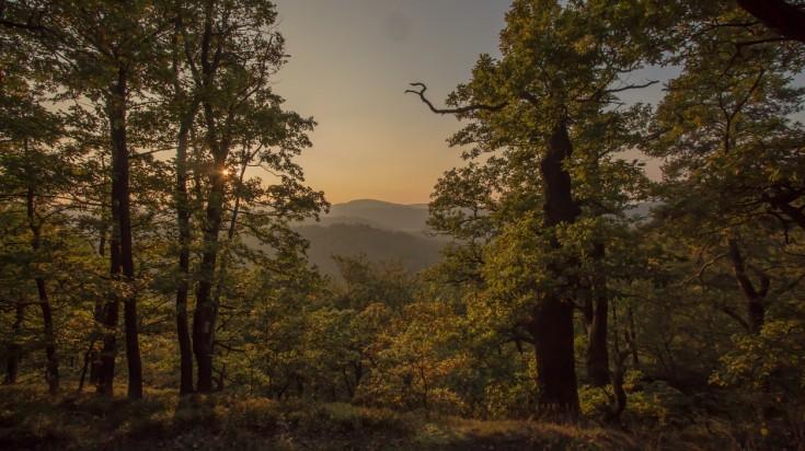 Forest near Eisenach on the Rennsteig