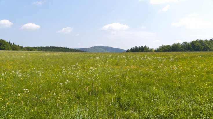 Meadow on the Rennsteig hiking trail in Germany