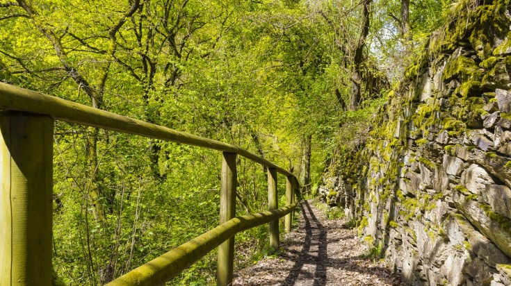 Rheinsteig hiking trail passes through forests in Germany