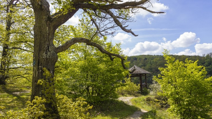 Rheinsteig hiking trails passes through various landscapes in Germany