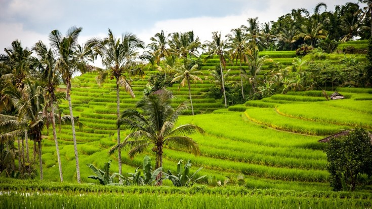 Visit rice terraces and take pictures of one of best place to visit in Bali