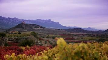 Vivanco winery in Rioja