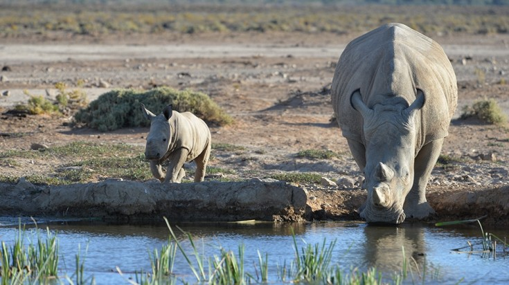 Safari in Cape Town at Inverdoorn Game Reserve