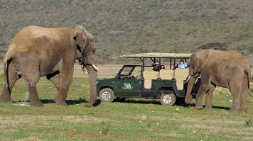Safari in Garden Route Game Lodge