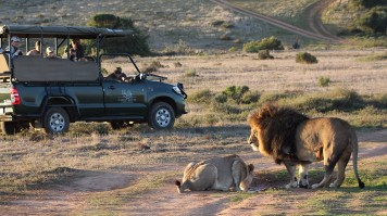 Safari Near Cape Town in Garden Route Game Lodge