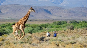 Sanbona offers Safari Near Cape Town
