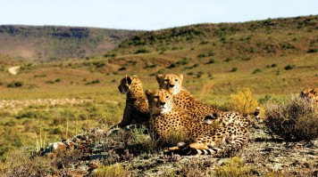 Wildlife Safari in Sanbona Near Cape Town