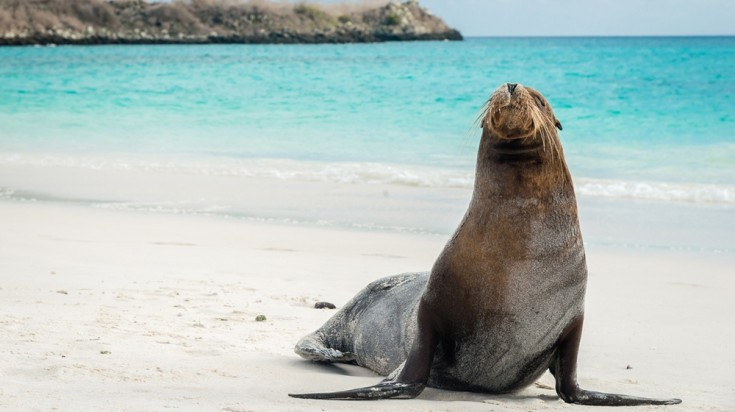 Kangaroo island has a lot of wildlife including herds of sea lions