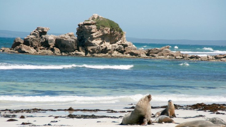 Kangaroo island is home to native fur seals, kangaroos and wallabies.
