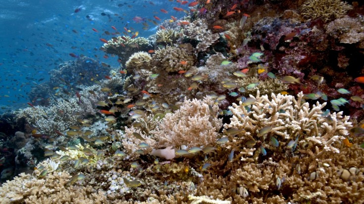 Go diving and snorkeling as a thing to do in Menjangan Island
